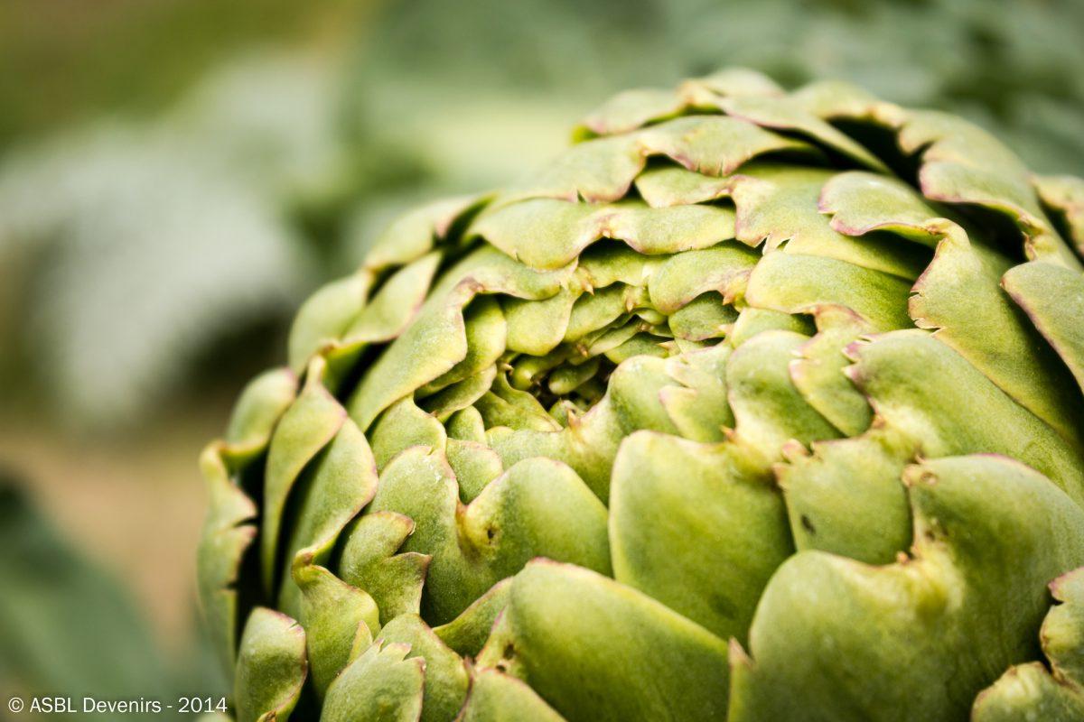 Métiers verts - Artichau